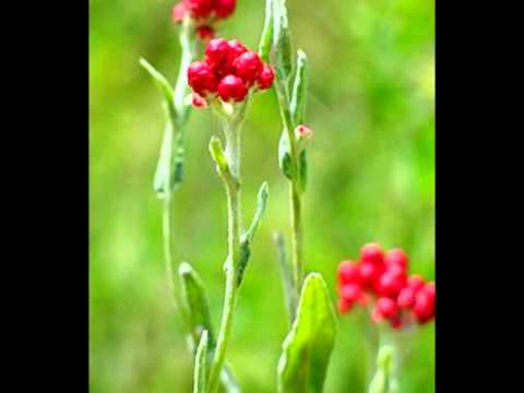 פרי גנך - אביבה אבידן .