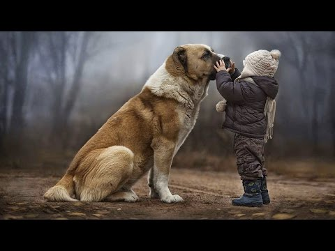 DOGS NEVER LIE ABOUT LOVE ★ Dogs Are True Friends [Funny Pets]