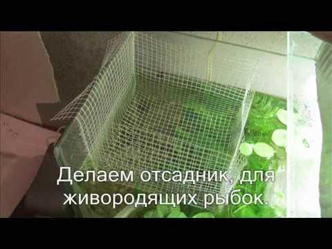 Отсадник для аквариумных живородящих рыбок. Своими руками.