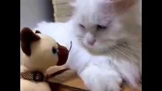 Кошка который бегство из игрушки мягкие собаки♥кот Котик Кошечка кошки милый смешной
