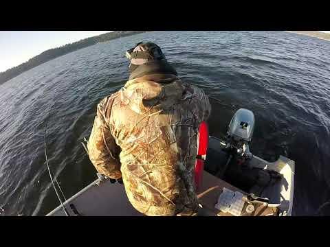 Lake Sammamish Cutthroat With Elgin Fishing