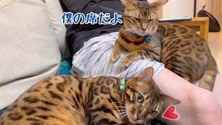 豹柄たぬき猫にモテモテのパパさんの休日