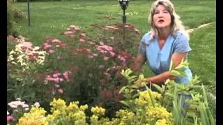 видео цветы кемерово