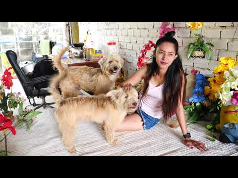 Beautiful girl playing with dog funny  How to train Puppy Smart dog Part 2