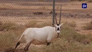 محمية الشومري.. منتجع الحيوانات والطيور في مدينة الأزرق - (1-11-2019)