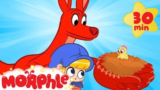 The Pet Kangaroo - Morphle Animal Videos   Cartoons for Kids   Mila and Morphle