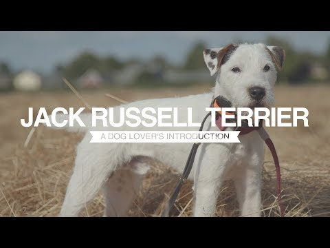 JACK RUSSELL TERRIER A DOG LOVER'S INTRODUCTION