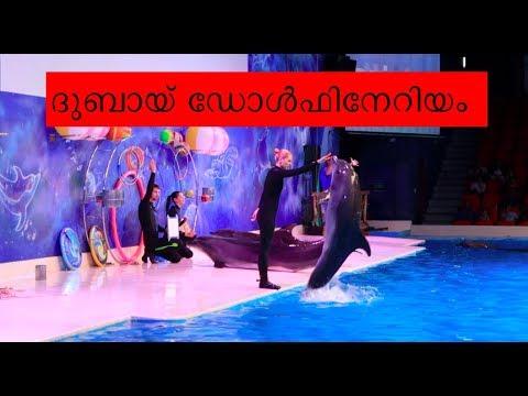 ദുബായ് ഡോൾഫിൻ ഷോ  | DUBAI DOLPHIN & SEAL SHOW | TRAVEL VLOG malayalam
