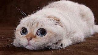 Сколько и как спят кошки - Интересные факты про кошек - Забавные, смешные, любопытные коты - Видео(Смотрите видео: сколько спят кошки и как спят коты - забавные и любопытные кошки - интересные факты https://www.you..., 2016-02-01T16:00:18.000Z)