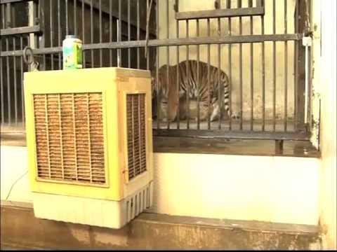 पटना के चिड़ियाघर में जानवरों को गर्मी से बचाने के लिए विशेष व्यवस्था