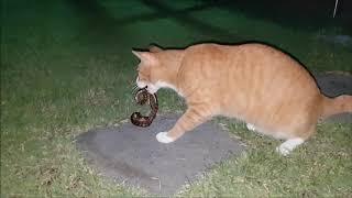 고양이와 뱀의 대결, 그 종말은?