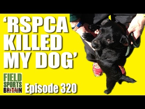 Fieldsports Britain - 'The RSPCA Killed My Dog'