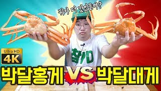 Mukbang review two most expensive Korean crabs! eatingshow Korean food [ENG sub]