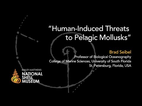 Mollusks in Peril — Human-Induced Threats to Pelagic Mollusks