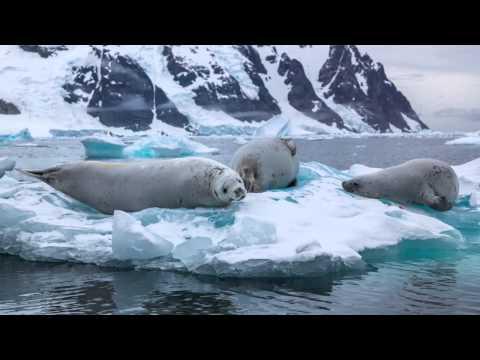 Antarctica Basecamp Plancius March 2015