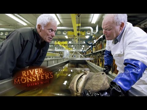 Monsters In The UK | HORROR STORY | River Monsters