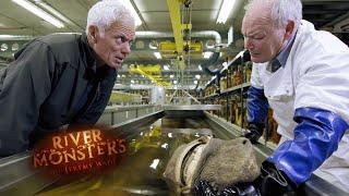 Monster in UK Waters - River Monsters