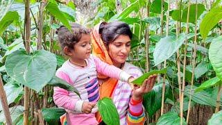 हमने पहली बार देखी 🌴 गांव में पान की खेती 👉 Betel Leaf Farming in India