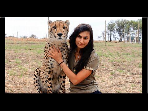 Cheetahs Raised By Meerkats?! - Volunteer Southern Africa