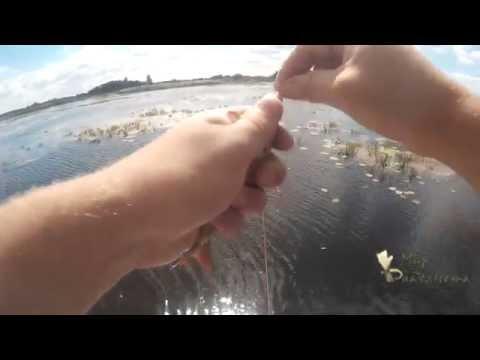 ловля красноперки с лодки