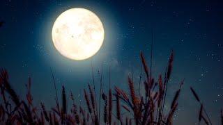 INSOMNIA Relief ★︎ Fall Asleep Fast ★︎ Black Screen, Melatonin Release