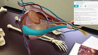 Key Features: Human Anatomy Atlas 2018 Site License