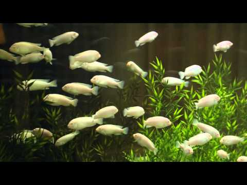 Barrat Homes Office Aquarium