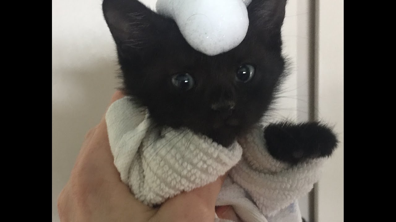 Watch How to Give a Kitten a Bath video