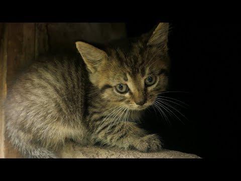 New little kitten afraid of me
