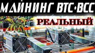 видео Чем майнить биткоин кэш (Bitcoin Cash, BCH)?