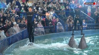 «Шоу Дельфинов» состоялось в Волгограде