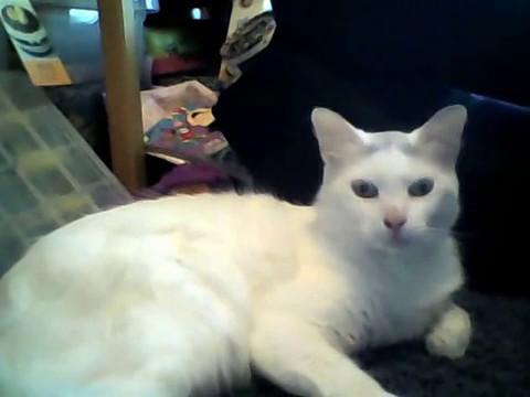 Meet my cat Gmo!