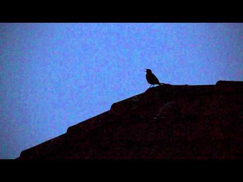 Vogelgezwitscher am Abend - Sounds of Nature