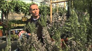 Gardening with Tim: Tips for Beginners