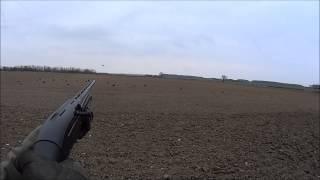 15/3/2015 Beretta A300 Xtrema  A few more crows
