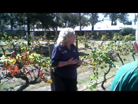 Hunter's Valley with Splendid Wine-growing Estates in New South Wales Part 02