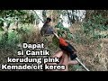 Mikat Burung Kemade Cit Keres  Mp3 - Mp4 Download