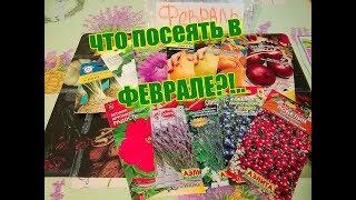 Что посеять в ФЕВРАЛЕ??!!  (Московская обл.)Удобный способ хранить семена.
