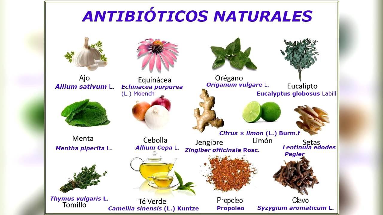 Antibi ticos naturales youtube - Aromatizantes naturales para la casa ...