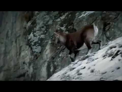 Otzi The Iceman Film documentary