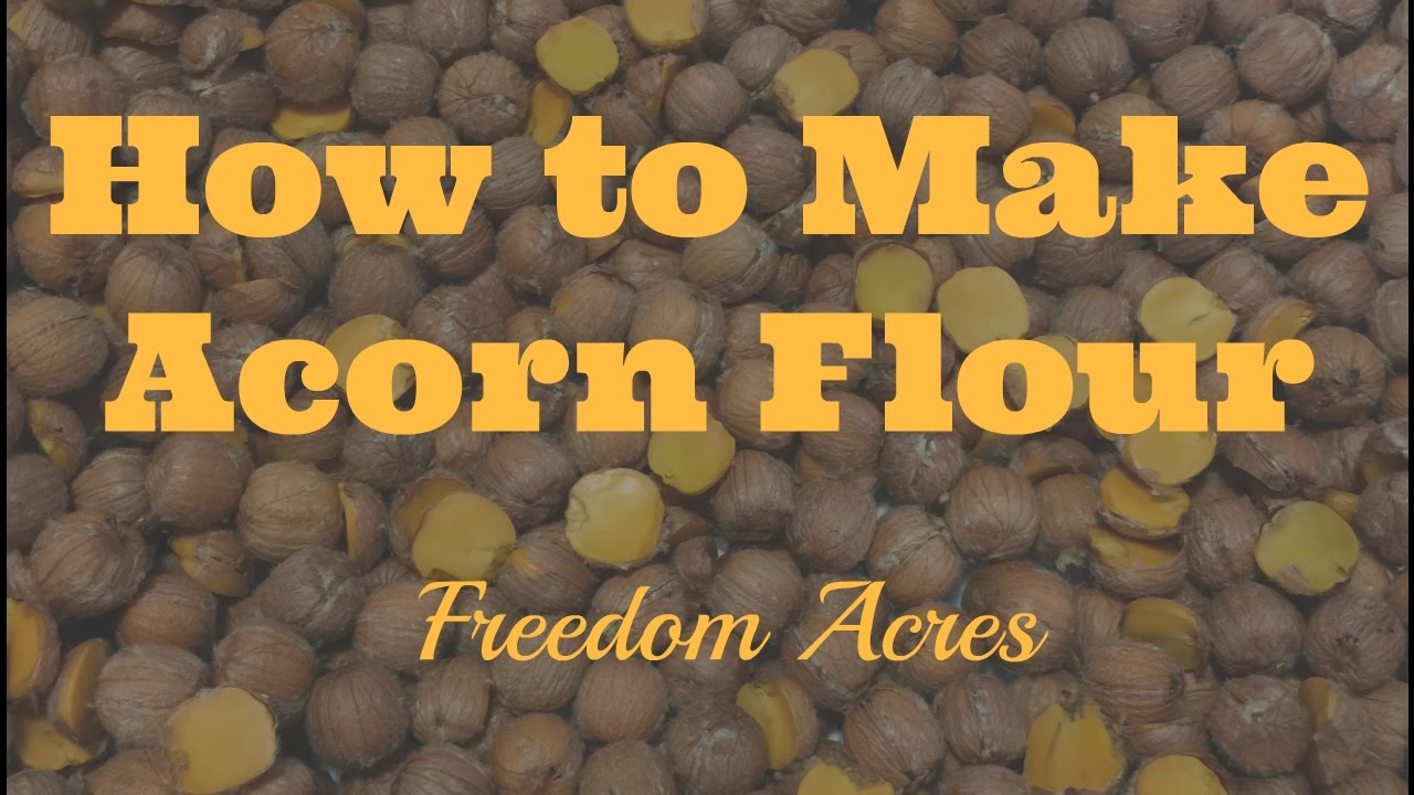 How to make acorn flour acorn meal youtube for How to preserve acorns