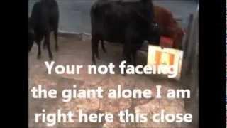 Voice Of Truth Rottweiler Herd Training