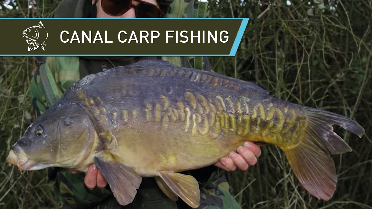 Carp Fishing Tips Nash Jack Brown Grand Union Canal