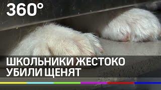 Школьники жестоко убили щенков в Екатеринбурге