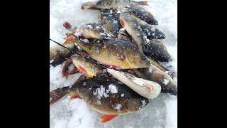 Два дня рыбалки на Нарвском водохранилище Ловим окуня на блесну