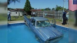 Собака за рулем: черный лабрадор  заехал в бассейн в Северной Каролине