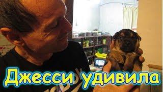 В семье снова пополнение ))) Где котята Мурки? (10.17г.) Семья Бровченко.