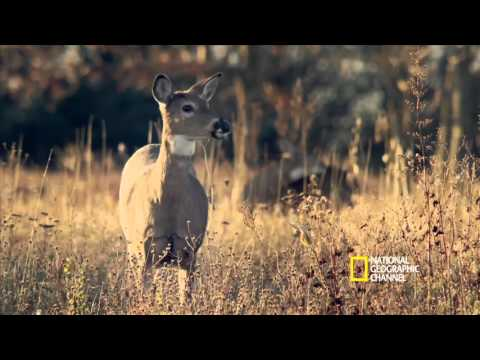 National Geographic Society Subaru Commercial