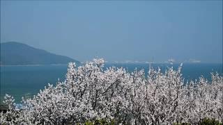 田尻町の杏祭りと菜の花畑に行って参りました! ただ今回は写真をメイン...