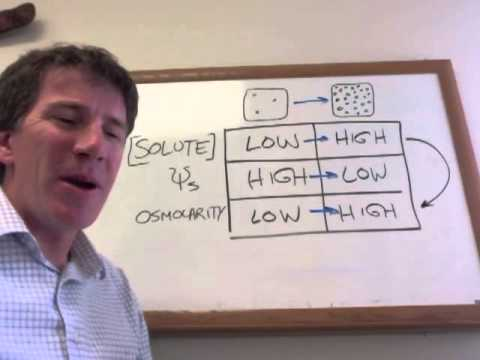 Water Potential and Osmolarity